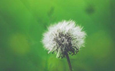 Allergia: ezt a 10 dolgot kell róla tudnod, hogy le tudd győzni
