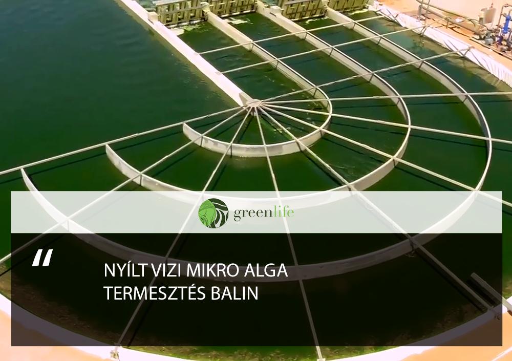 imune-alapanyag-termesztes-greenlife.hu