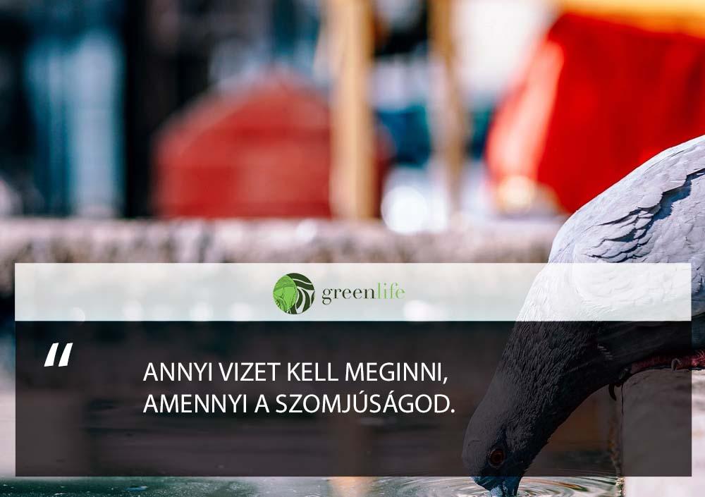 vizivas-szomjusagod-greenlife.hu