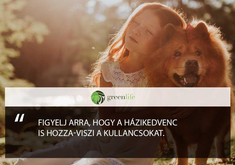 haziallatban-is-kullancs-greenlife.hu