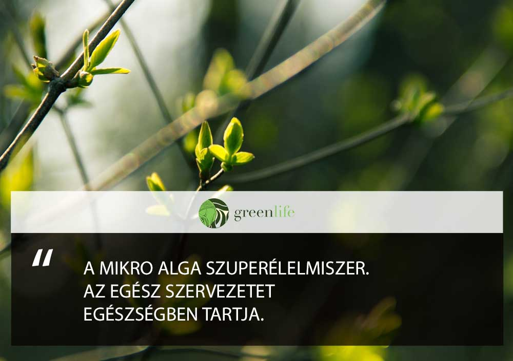 mikro-alga-pajzsmirigy-alulmukodes-ellen