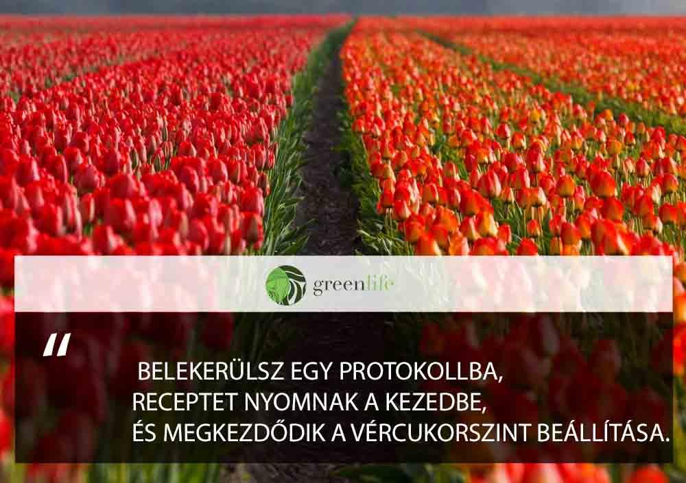 orvosi-protokoll-a-cukorbajra-greenlife