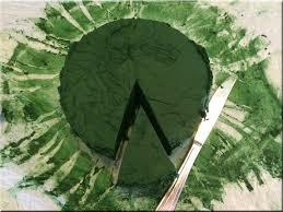 alga-imune-massza-greenlife.hu