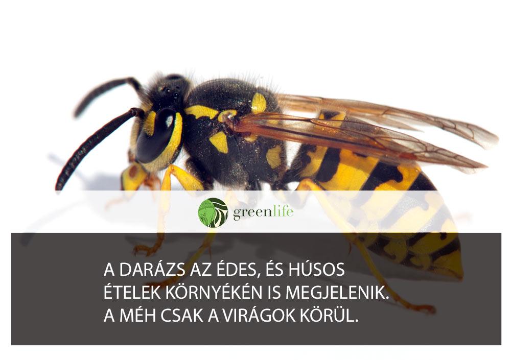 darazscsipes-greenlife.hu