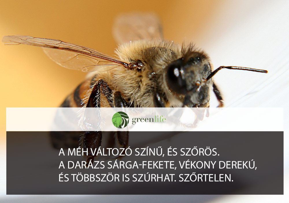 mehcsipes-darazscsipes-greenlife.hu