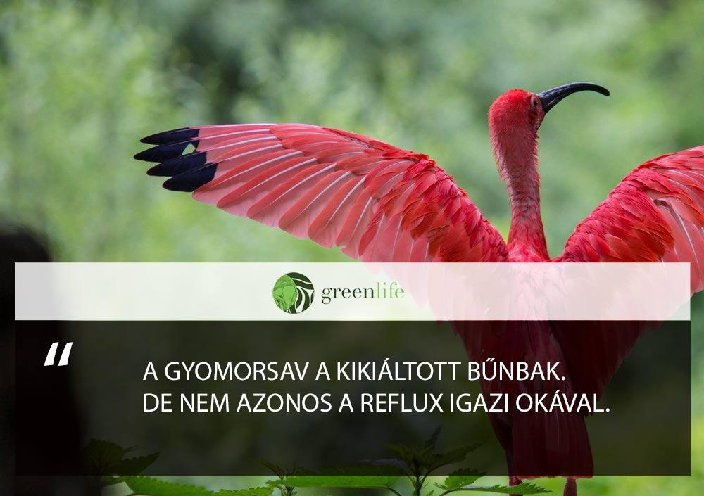 gyomorsav-bunbak-reflux