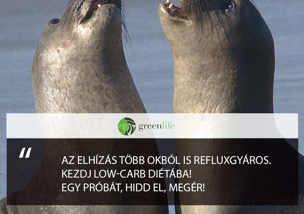 gyomorsav-reflux-elhizas