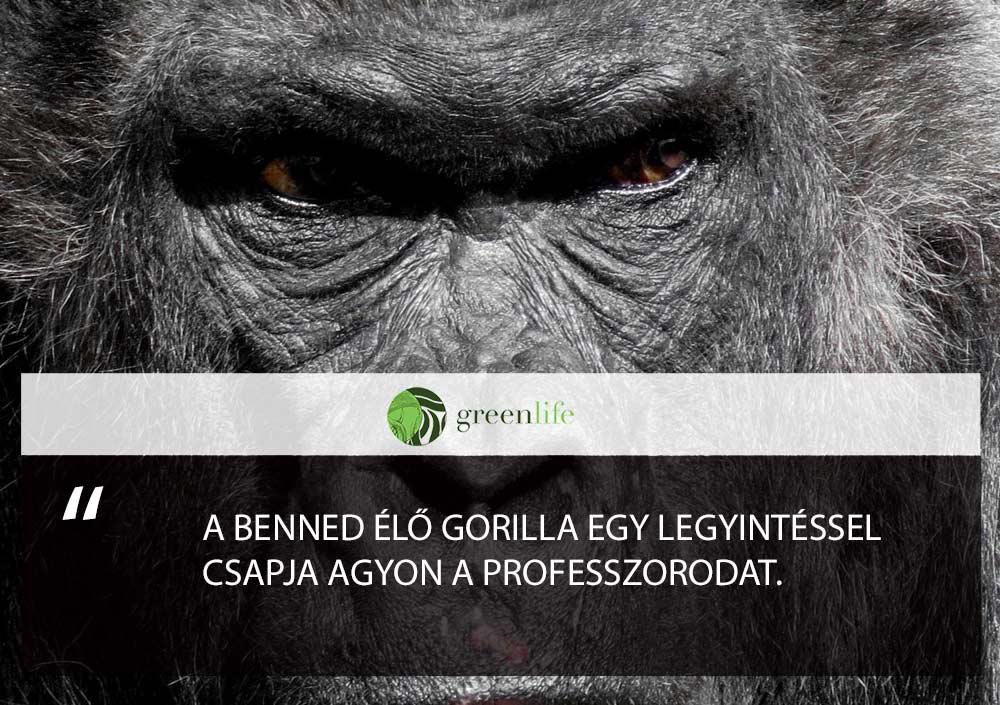 benned-elo-gorilla-fogadalmak